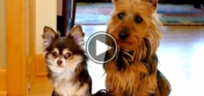 Totally Hilarious tell tail dog rats out his buddy.