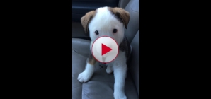 Puppy has Hiccups, this is so cute and so funny.