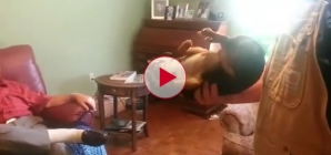 Hilarious Dog plays dead when picked up by anyone but its owner.