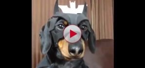 Funniest Dog video compilation I've ever seen.