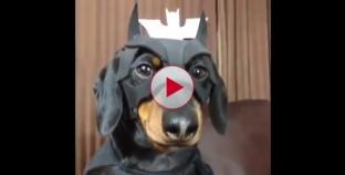 Funniest Dog video compilation I've ever seen.