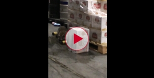 Racoon Breaks into Beer warehouse and gets pissed drunk.