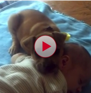 How cute is this! Puppy falls asleep with baby on the floor.