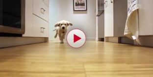 Dogs running for dinner time lapse video. Watch them grow up. Amazing.