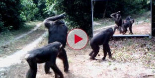 Hilarious Reaction from these animals when they see themselves in the mirror.