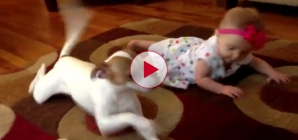 Very cute. Dog shows little Baby how to crawl for the first time.