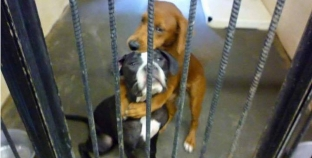 Heartwarming picture of dogs hugging saves them from being put to sleep.