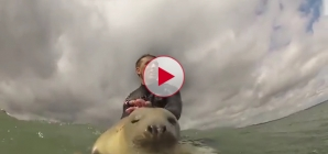 Have you ever seen a Seal Pup that likes to Surf before? Cool video.