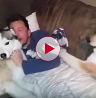 Jealous dog demands more attention from owner. Extremely Funny!