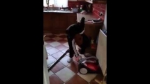 Hilarious! Irish Dad pranks son on how to turn on the vacuum cleaner!